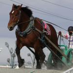 2014年能力検定にて1番時計を叩き出した素晴らしきセンゴクエース号&鈴木恵介騎手